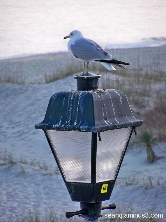 Bird Latrine