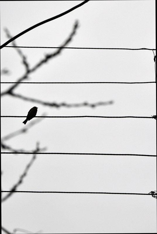 تنهایی (Loneliness)