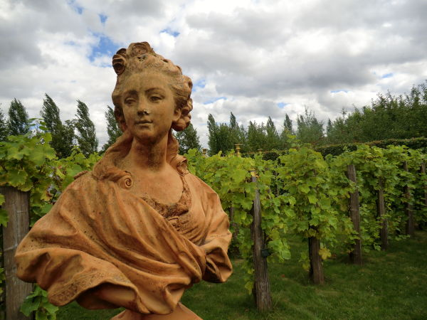 Les vignes de Marie-Antoinette
