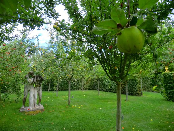Pomme verte au jardin d'Eden
