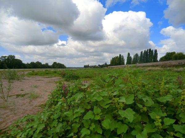 Végétations au bancs de sable de la Loire