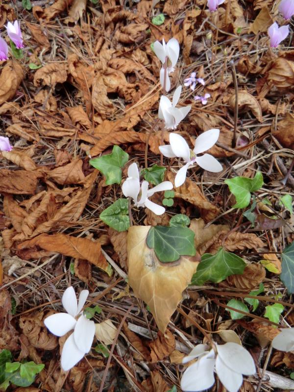 Composition florale et automnale