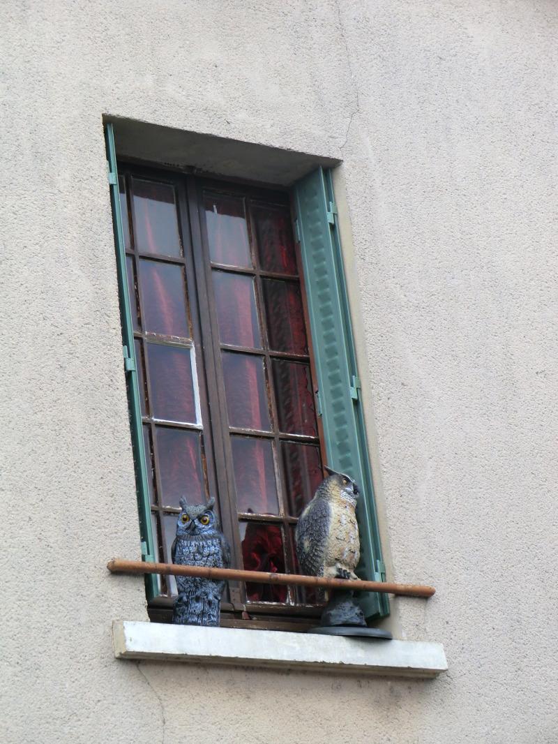 Chouette fenêtre