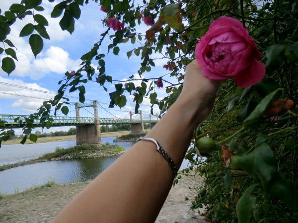 Roses vers une cale d'Ingrandes-sur-Loire