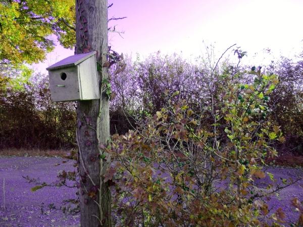 Nichoir de mésange à Saint-Martin-Fouilloux