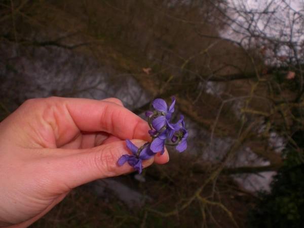 Violette à La Jubeaudière au Village du Louet