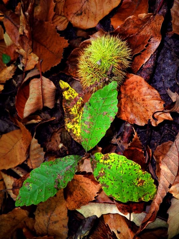 Planchette de feuilles peinte au sol.