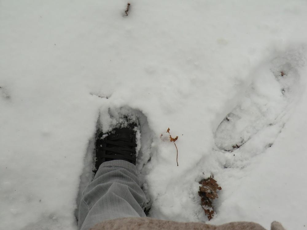 Suivre les pas de l'Angevine