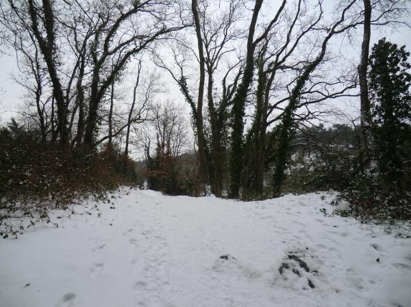 La rive gauche de l'étang Saint-Nicolas