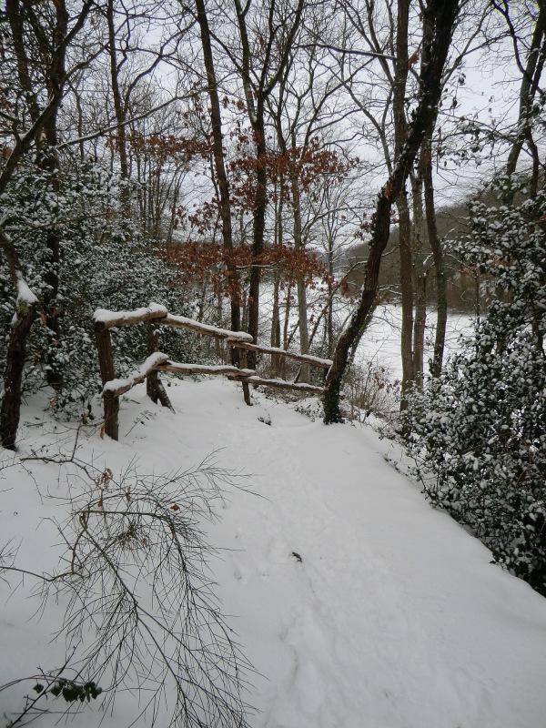 Le lac des canards siffleurs à l'étang