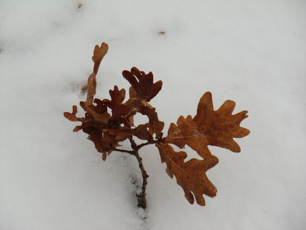 L'arbuste sur la neige de l'étang Saint-Nicolas