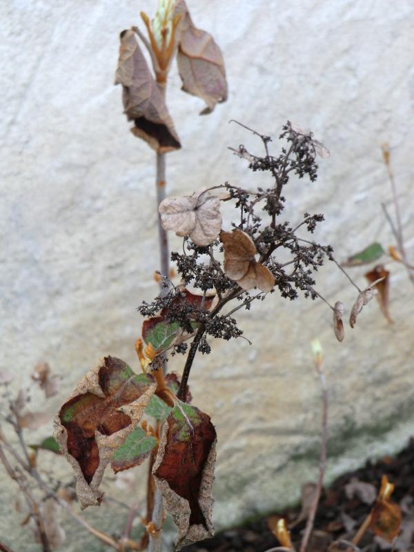 Composition florale à trois saisons