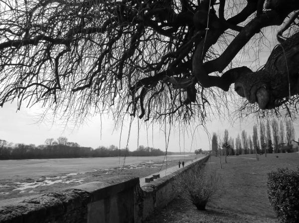 Vue du quai de la Loire à la fleur d'eau