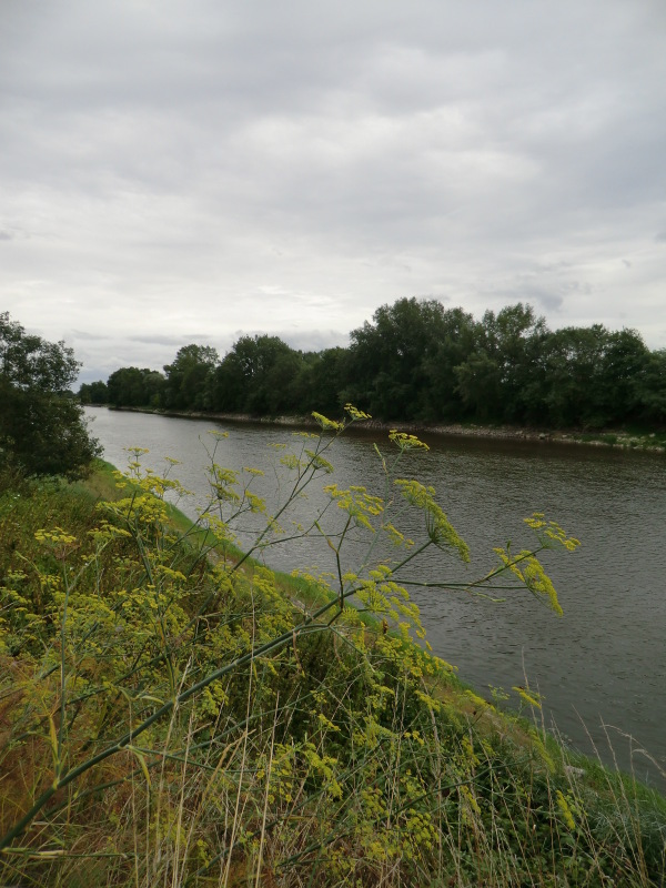 Le bras jaune de la Loire....