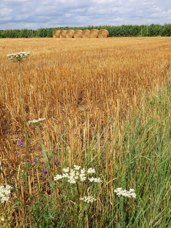 Entre champs de vignes et de blés