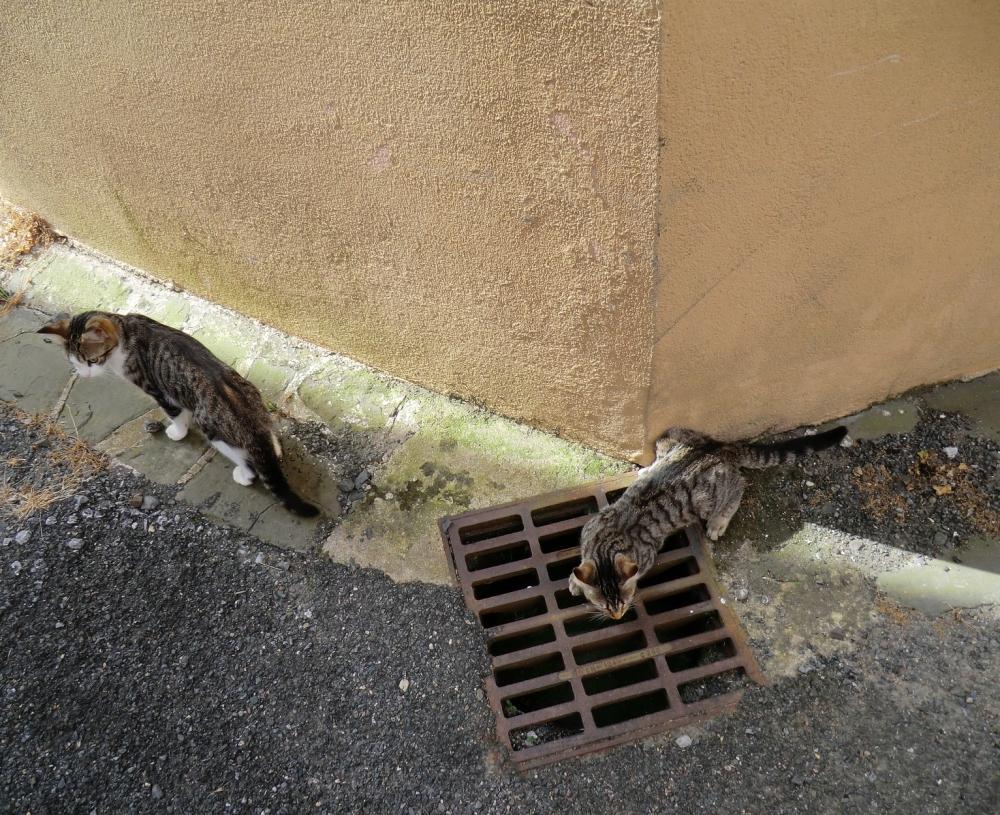 Chat de gouttière...