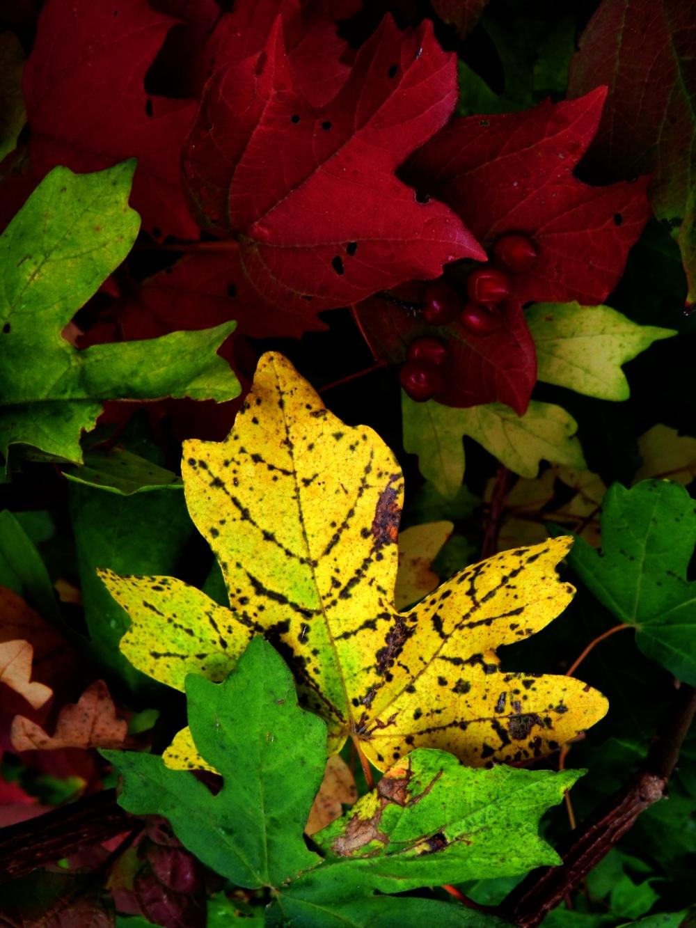 Ma vie terrestre en rouge,jaune,orange et vert...