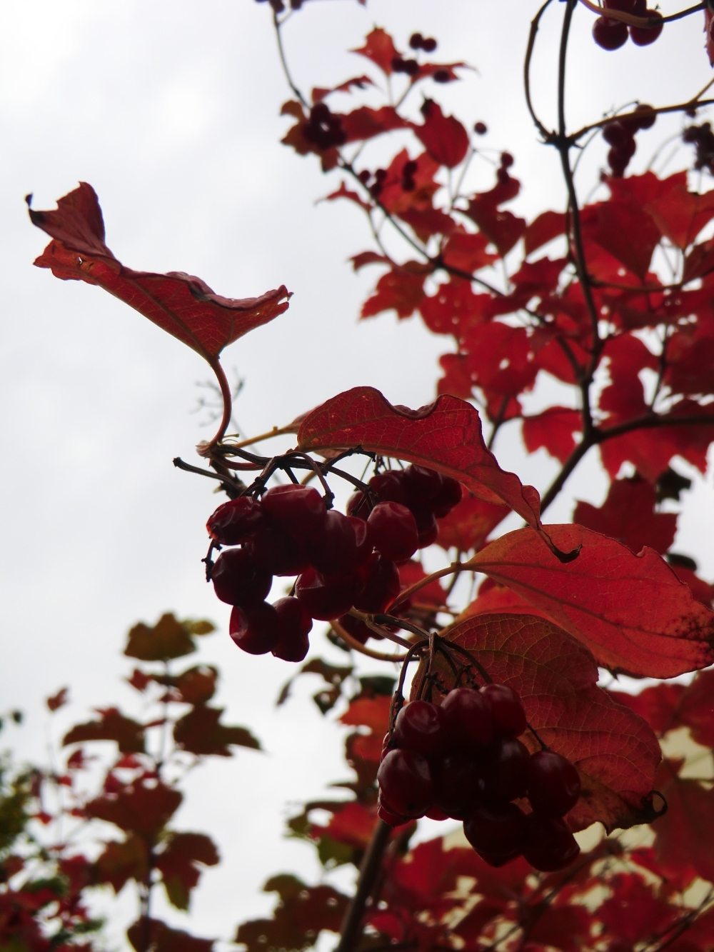 Le flamenco s'y danse de feuilles rouges