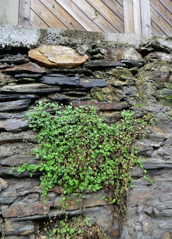 Un mur de shiste,bois,ciment et végétation