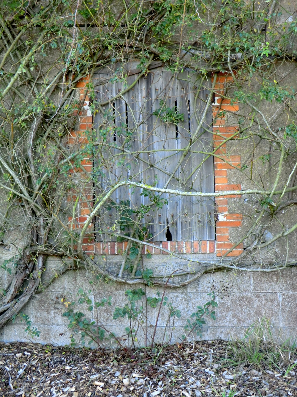Les lianes s'enroulent dans les méandres du passé