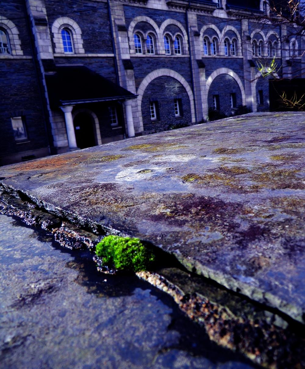 La mousse verte à l'ombre humide...