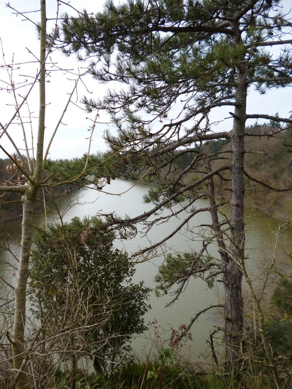 Les arbres renaissent à l'horizon de l'étang...