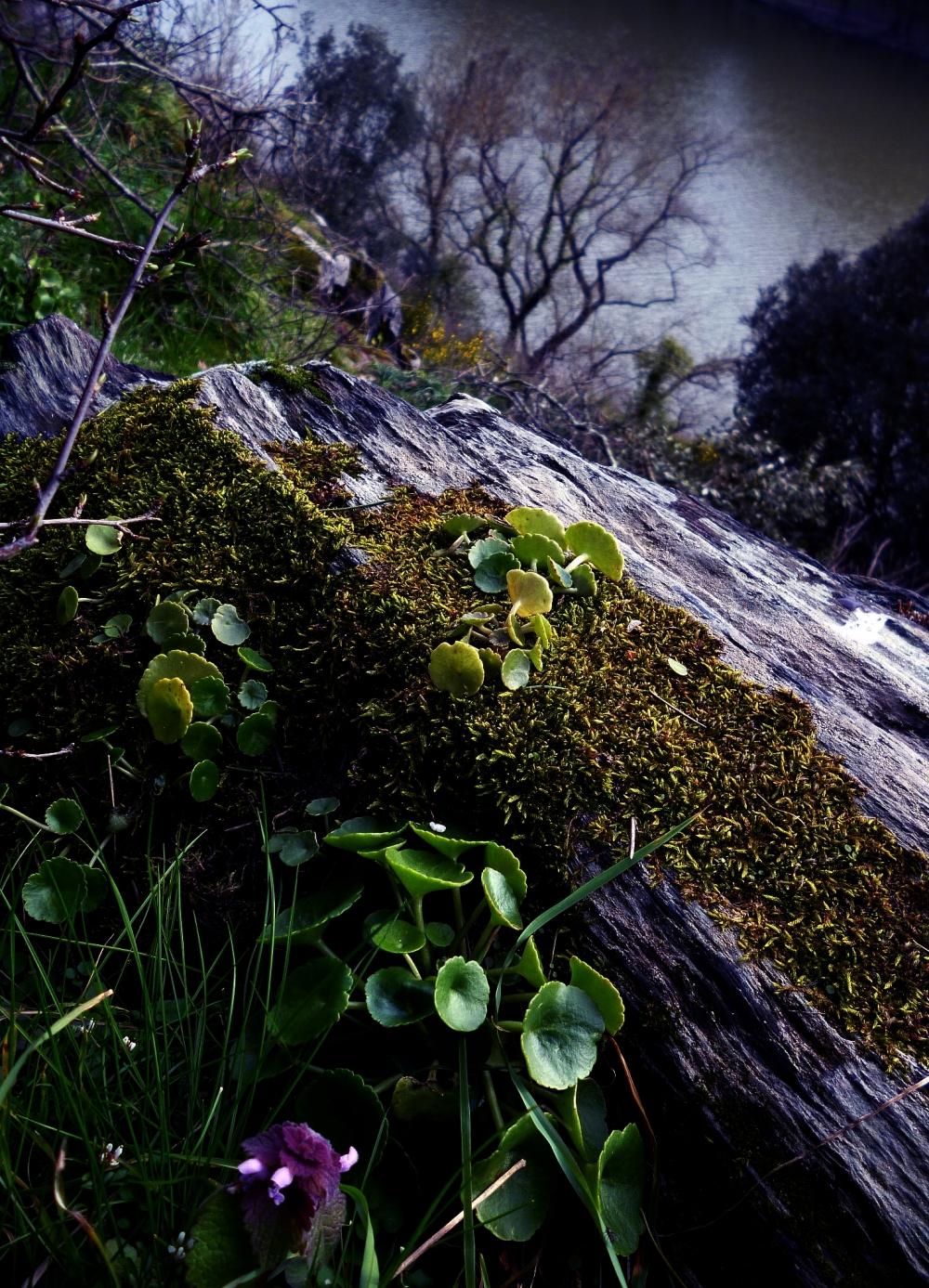 Un étang dans la forêt scintille le roc végétal