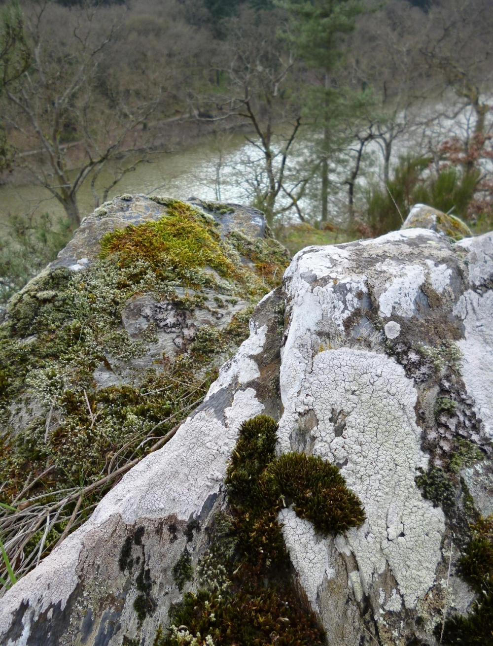 Aux fentes des roches sur les crêtes du Mont...