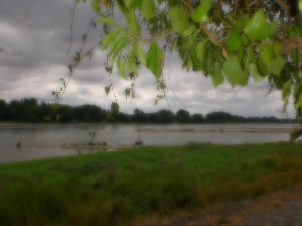 Pêcher le mirage de la brume des branchages