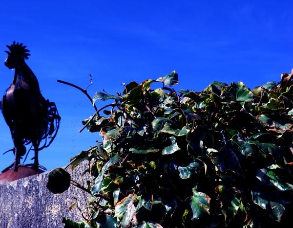 Un bouquet de crête de coq fer forgé....