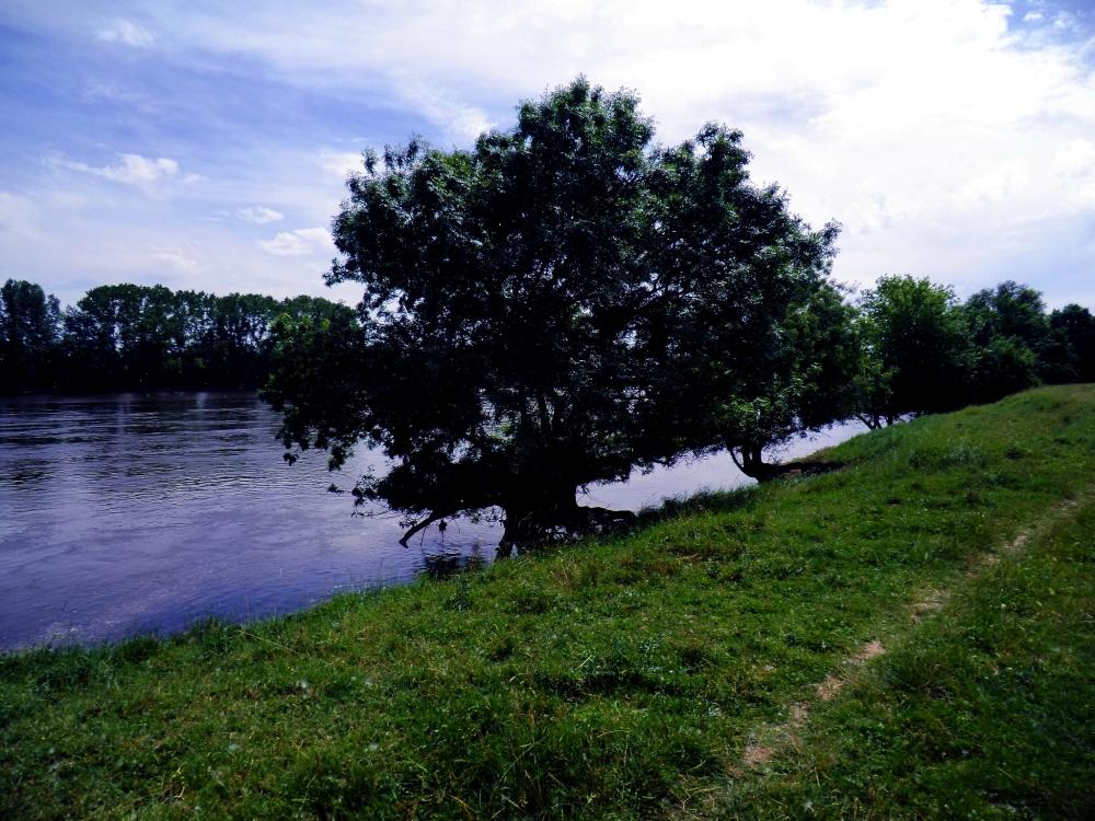 Sous les pieds des frênes coule le fleuve bleu...