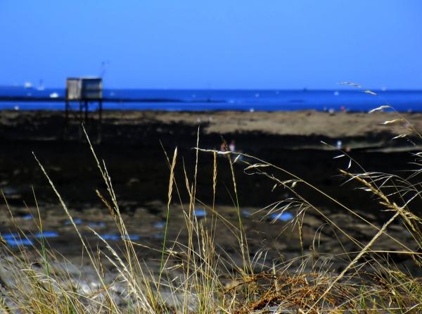 A grande marée,dénicher des crustacés...