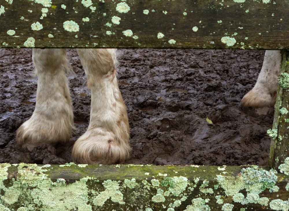 Avoir les pieds dans la boue apaise le moral..
