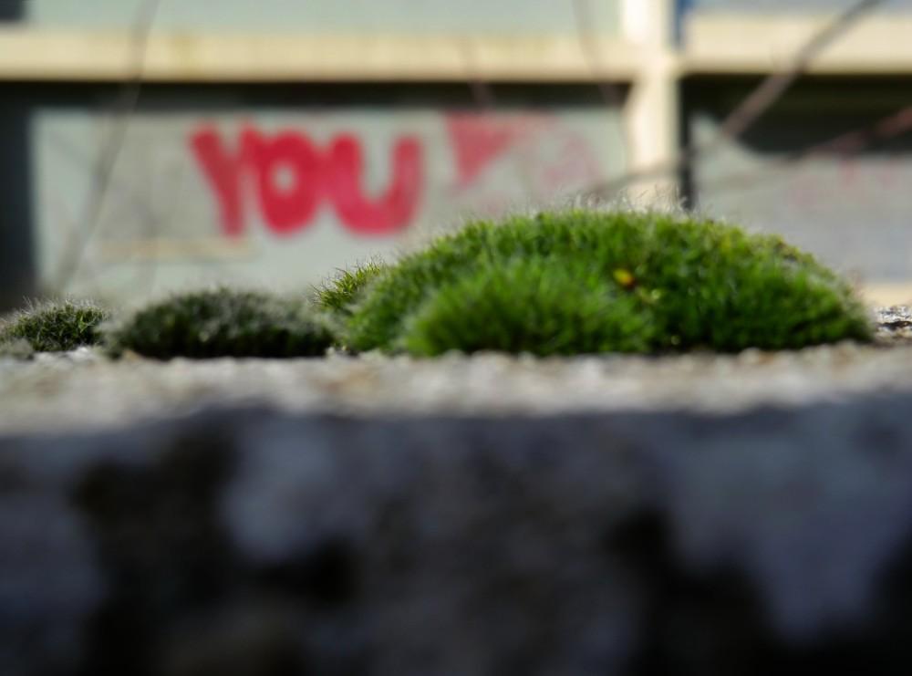 Mousse verte connectée au rayon vert de ta nature