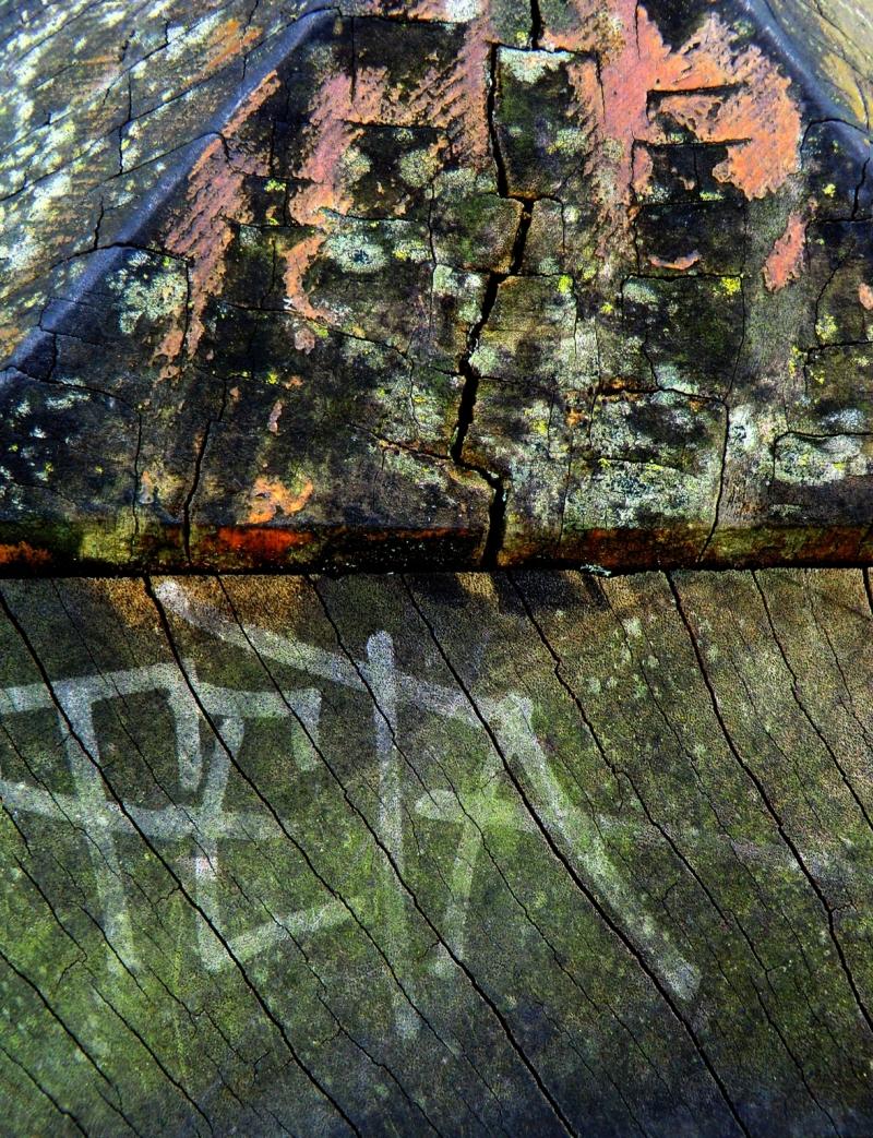 Pigments de bois se jettent aux couleurs fêtées...