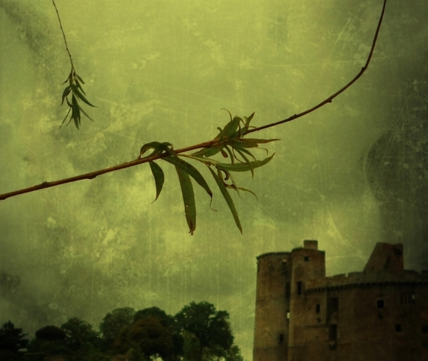 Les branches de l'époque nouvelle....