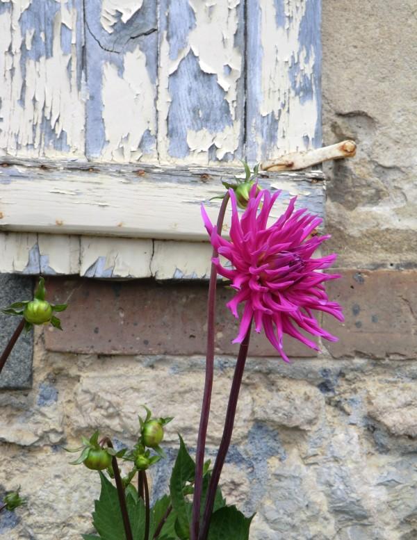 Voir la vie en rose en ouvrant grand les yeux...