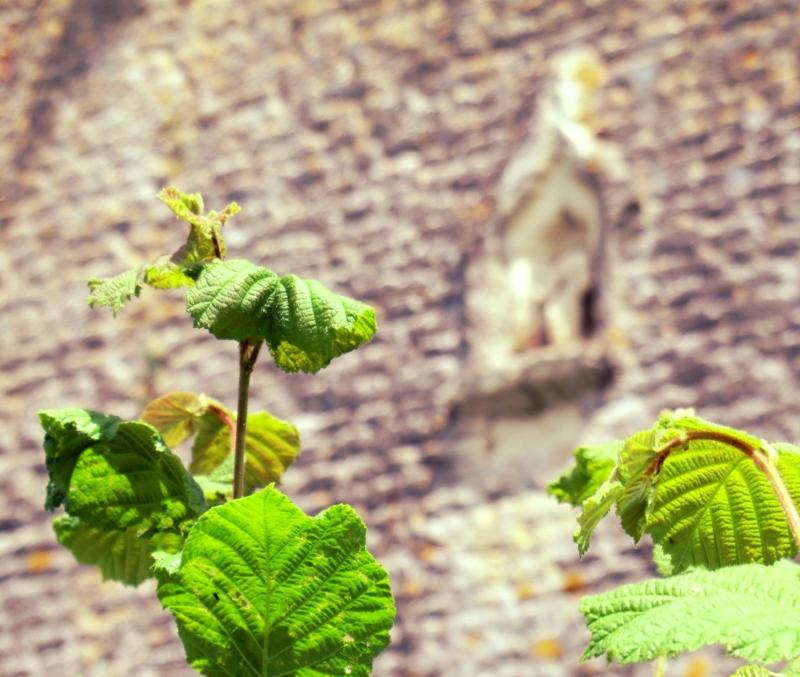 L 39 esprit gardien de la nature aux yeux de lumi re plant nature photos vers le reflet de l - L esprit des lumieres ...