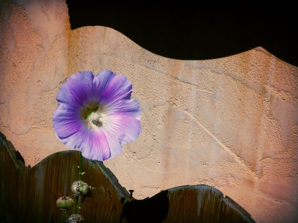 Fleurir de couleurs selon l'ensoleillement