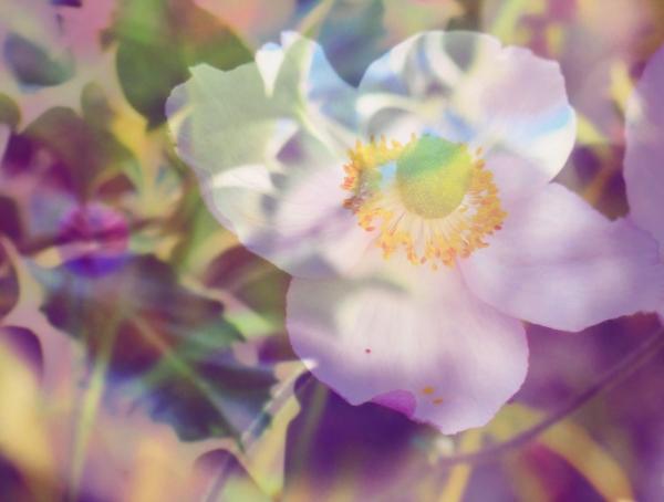 S'épanouir comme une fleur,le fruit du bonheur...