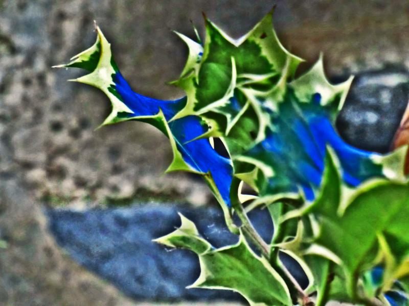 Feuilles peintes de craies sur une ardoise...