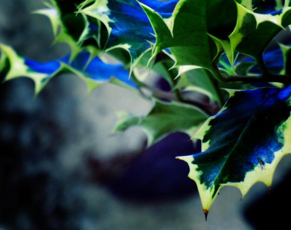 Entrer dans la joie du bleu profond...