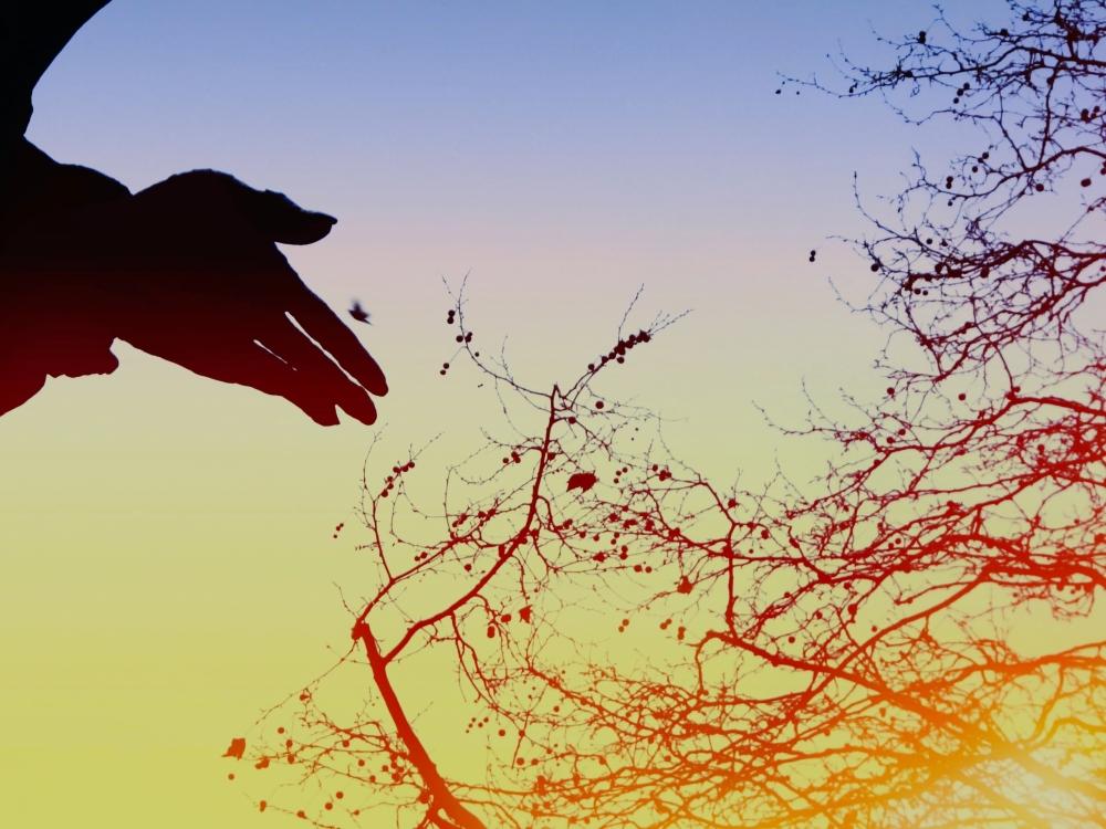 L'oiseau s'envole vers un ciel qui lui tend...