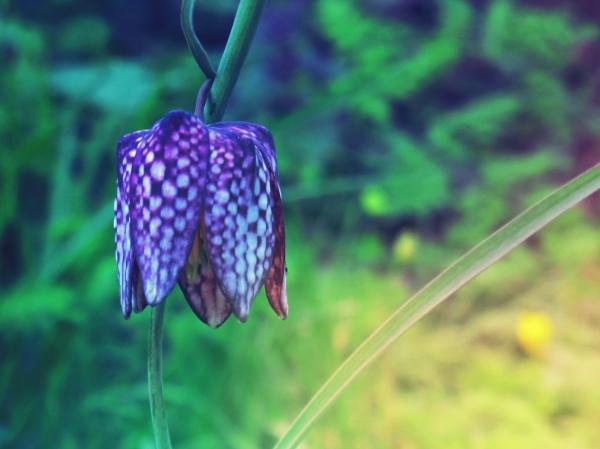 La gogane se délaisse de joie dans le bleu profond