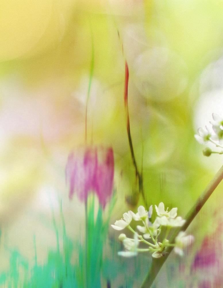 Sous mille couleurs,cueillir les fleurs à mes yeux