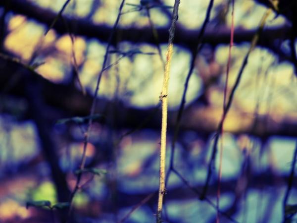La finesse lumière de la branche ...