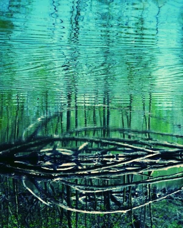 La lignée des branches mortes sur une île perdue
