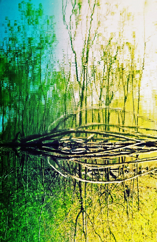 Nuance folle dans cette nature chromatique verte