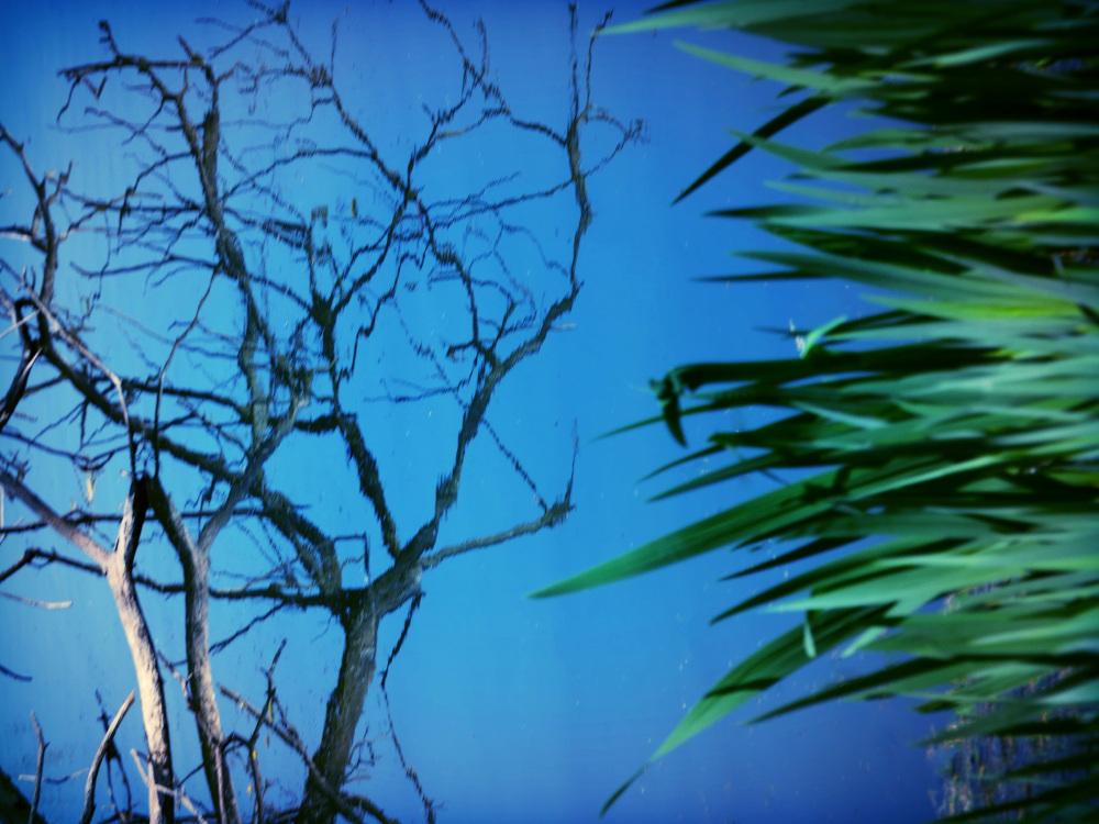 Au végétal ligneux dont la tige s'élève dans l'eau
