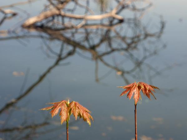 Toute merveille nature se reflète dans ma nature